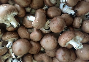 Mushroom Brown, Organic, France