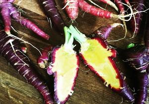 Carrots, 'Purple Haze' Heirloom